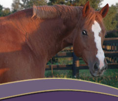 Hint of Obvious - AQHA Mare for sale!